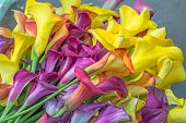 pic of calla  - Multicolored calla lily flower floral pattern abstract background - JPG