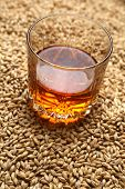 picture of tumblers  - Tumbler glass with whiskey standing on barley malt grains - JPG