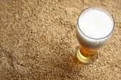 picture of malt  - Tall glass of light beer standing on barley malt grains - JPG