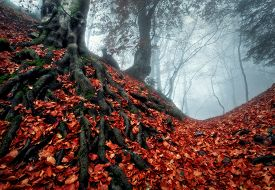 foto of crimea  - Fog in the Forest - JPG