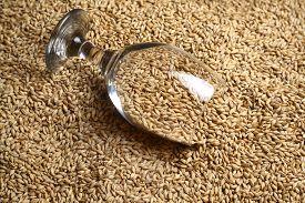picture of malt  - Beer glass full of barley malt lying on malt grains - JPG