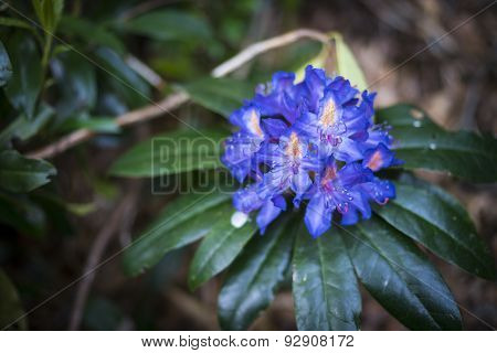 Bright blue plant May