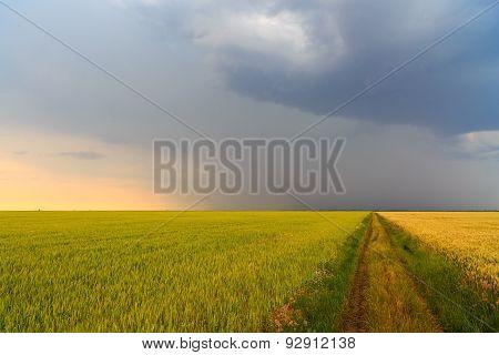 rain clouds on a farm field