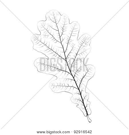 Isolated Vector Monochrome Oak Leaf.