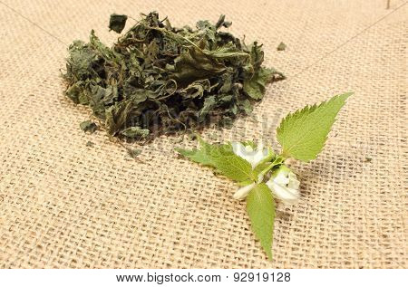 Fresh Nettle With White Flower And Heap Of Dried Plant