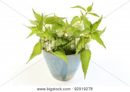 Fresh Nettles With White Flowers In Blue Cup