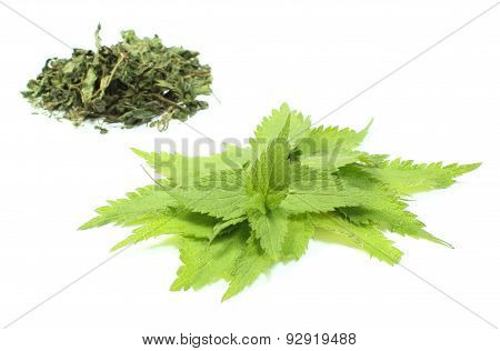 Fresh And Dried Nettle On White Background