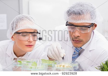Scientists examining leafs in petri dish in the laboratory
