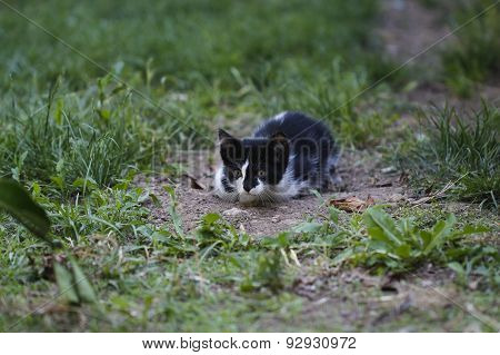 Hunted kitten.