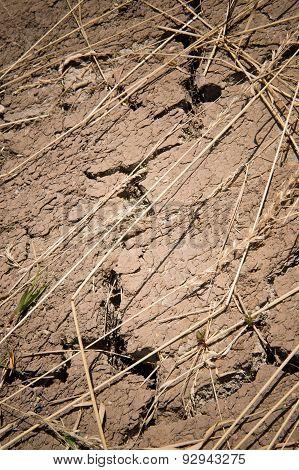 Detail Of Dry Soil
