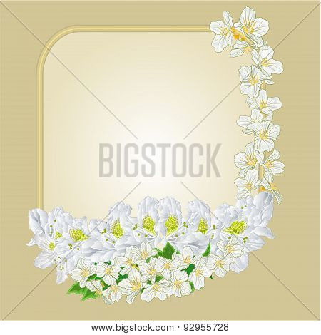 Frame Rhododendron And Jasmine Vector