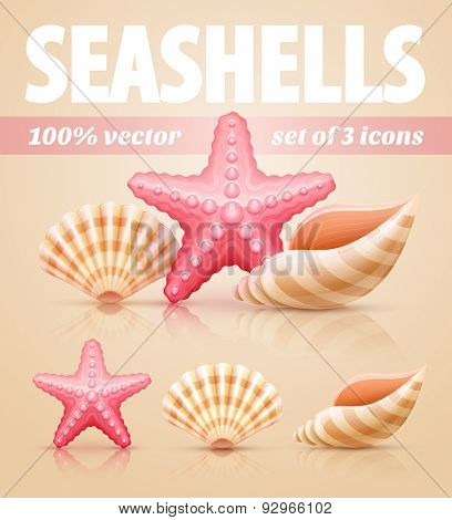 Set of summer sea shells and starfish icons. Eps10 vector illustration