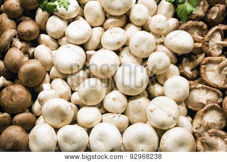 Edible mushroom in market stall