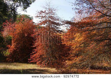 Autumn Landscape5