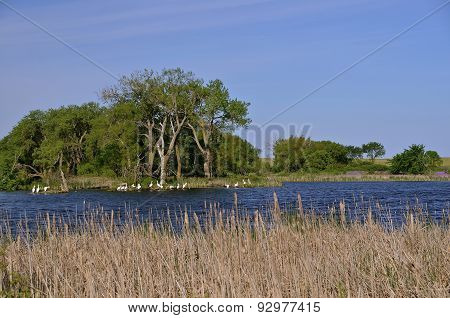 Herons reside at a marsh