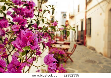 view of a charming street of Cadaques, Costa Brava, Spain, with the typical white washed houses and purple bougainvillea flowers