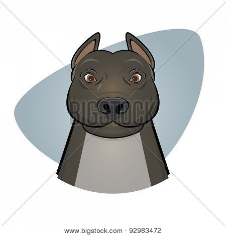 pitbull illustration