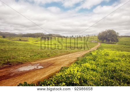 Beautiful Spring countryside landscape with yellow flowers and a dirt road
