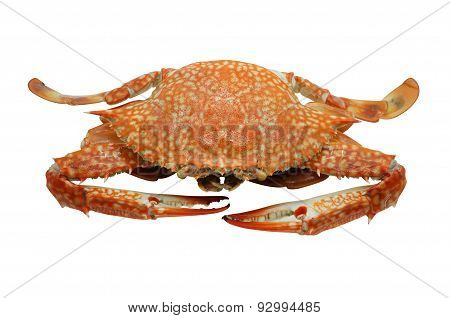 Streamed, boiled Flower crab, Blue crab, Blue swimmer crab, Blue manna crab, Sand crab