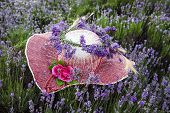 picture of lavender plant  - Female hat decorated with lavender flowers - JPG
