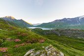 image of italian alps  - High altitude alpine landscape at dawn with blooming rhododendrons in the foreground and big lake in the background - JPG
