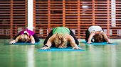 pic of hare  - Girls practicing yoga - JPG