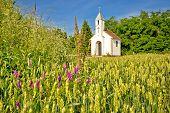 pic of chapels  - Catholic chapel in rural agricultural landscape hay field in Cepidlak village of Croatia   - JPG