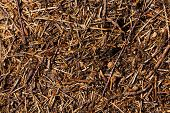 picture of ant  - photographed by a close up an ant hill with the ants who are on it - JPG