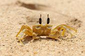 picture of exoskeleton  - Close up of a Crab on sand beach - JPG
