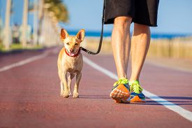 foto of street-walker  - chihuahua dog close together to owner walking with leash outside at the park as friends - JPG