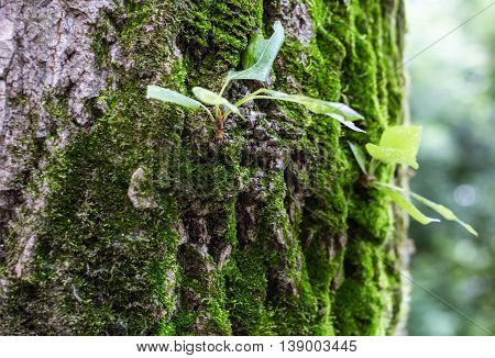 The Young Shoots Of The Old Tree Trunk With Cracked Bark And Moss