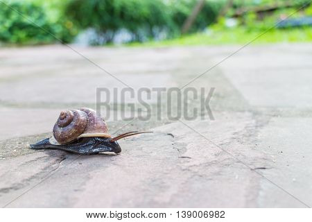 close up for snail moving on the street