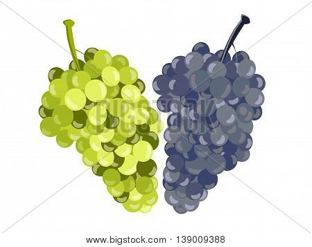 Realistic Grapes Isolated On White Background. Vector Illustration.