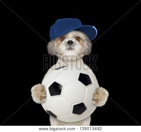 Dog in cap with a ball -- isolated on black background