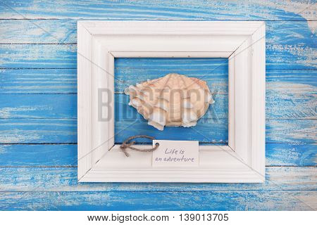 Sea Shell In The Frame With Sign - Life Is An Adventure