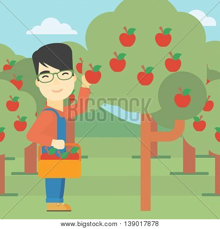 An asian farmer holding a basket and collecting apples in fruit garden. Farmer collecting apples. Vector flat design illustration. Square layout.