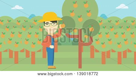 An asian farmer collecting oranges. Young farmer working in orange garden. Vector flat design illustration. Horizontal layout.