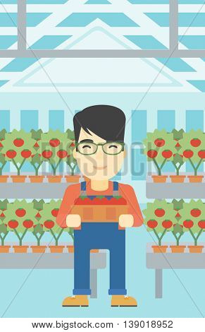 An asian farmer holding a box with tomatoes on the background of greenhouse. Young farmer collecting tomatoes in the greenhouse. Vector flat design illustration. Vertical layout.
