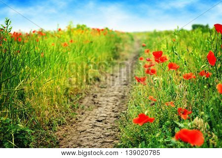 Beautiful landscape with wild red poppies on summer day