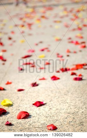 Red and yellow rose petals on floor after wedding ceremony outdoors.