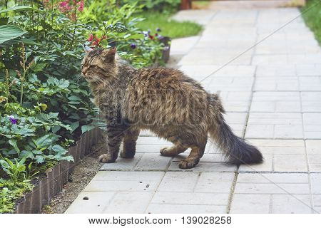 sideview of angry siberian cat is smelling green plant