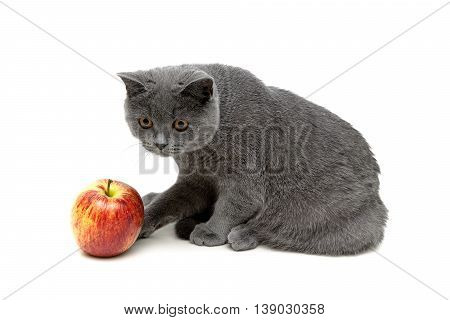 Kitten and apple isolated on a white background. Horizontal photo.