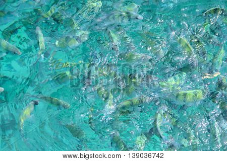 Photo of a tropical Fish in transparent blue sea water close-up