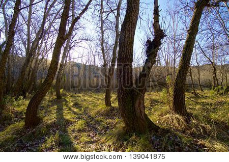 forest view in winter