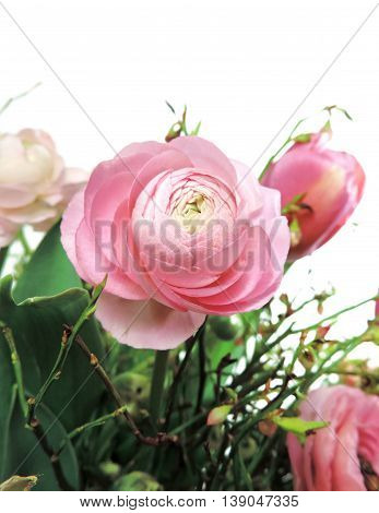 Peony or buttercup flower boquet, isolated on white.