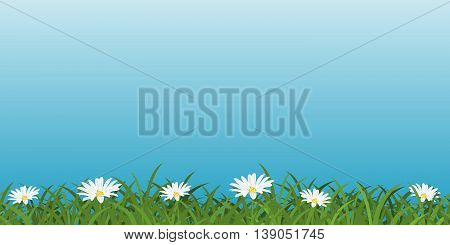 Background with daisies. Bright meadow with grass and wild flowers. Repeatable Nature pattern. Horizontal seamless floral border. Vector illustration.