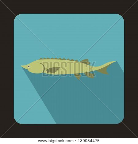 Fresh sturgeon fish icon in flat style on a baby blue background