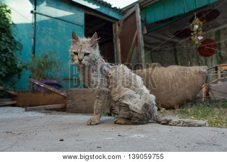 Poor and sick cat sitting in the yard