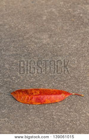 Leaf of the tree lying on the asphalt road in the form of a smile