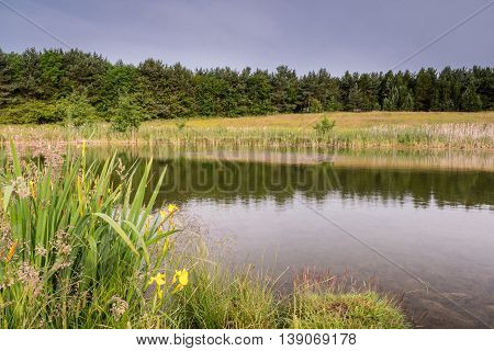Pond at East Cramlington Local Nature Reserve, in Northumberland, which provides free and easy access to nature